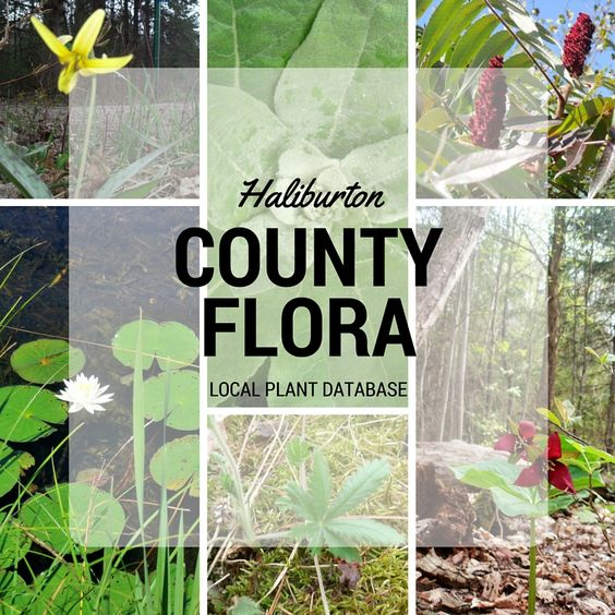 Plants of Haliburton County