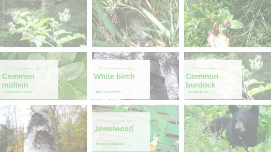 Rachel's Wild Plants Blog