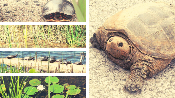 How Turtles Use Wild Plants
