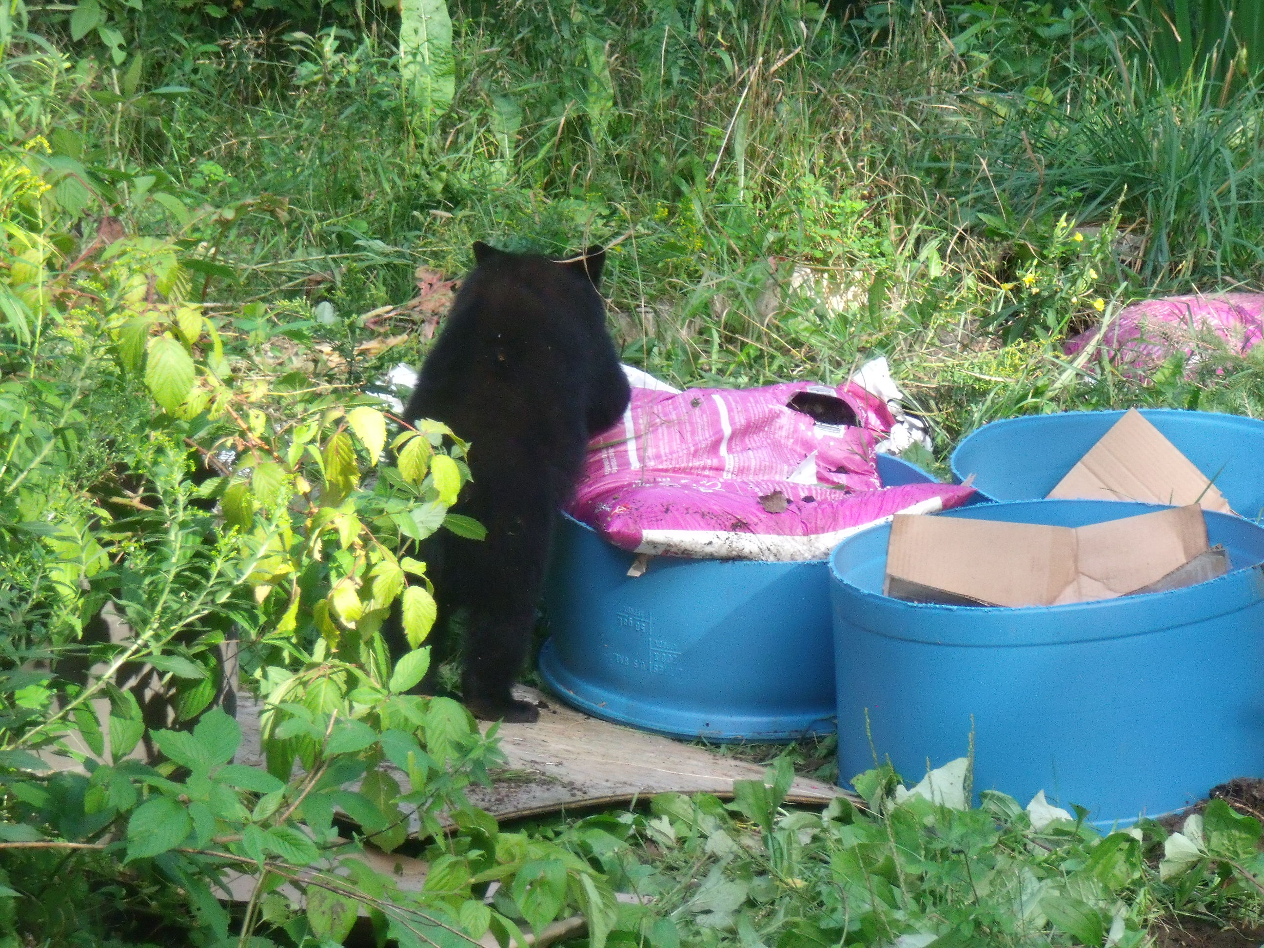 Little bear garden helper