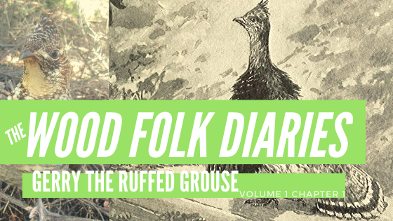The Wood Folk Diaries: Volume 1, Chapter 1: Gerry The Ruffed Grouse