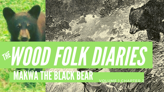 The Wood Folk Diaries: Volume 1, Chapter 2: Makwa The Black Bear