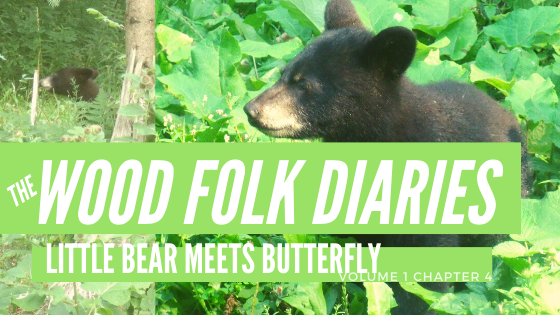 The Wood Folk Diaries: Volume 1, Chapter 4: Little Bear Meets Butterfly