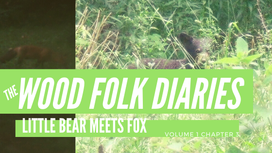 The Wood Folk Diaries: Volume 1, Chapter 3: Little Bear Meets Fox