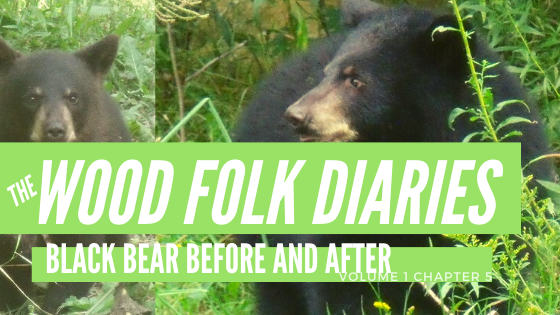 The Wood Folk Diaries: Volume 1, Chapter 5: Black Bear Before and After