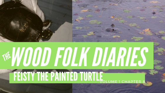 The Wood Folk Diaries: Volume 1, Chapter 8: Feisty The Painted Turtle