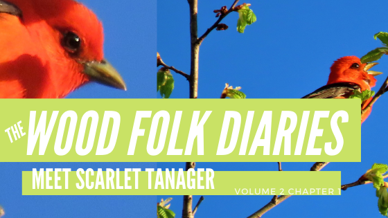The Wood Folk Diaries: Volume 2, Chapter 1: Meet Scarlet Tanager