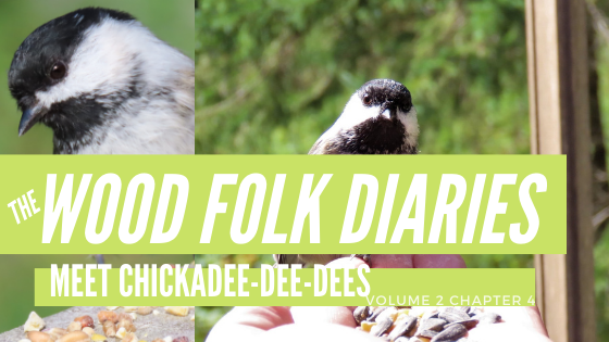 The Wood Folk Diaries: Volume 2, Chapter 4: Meet Chickadee-dee-dees