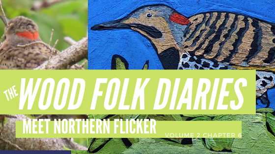 The Wood Folk Diaries: Volume 2, Chapter 6: Meet the Northern Flicker
