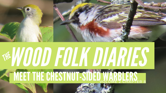 The Wood Folk Diaries: Volume 2, Chapter 8: Meet the Chestnut-Sided Warblers and Friends