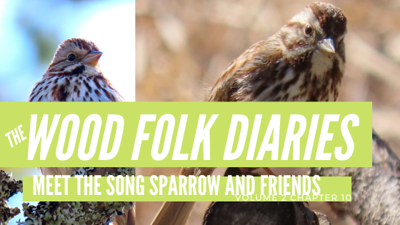 The Wood Folk Diaries: Volume 2, Chapter 11: Meet the Song Sparrow and Friends